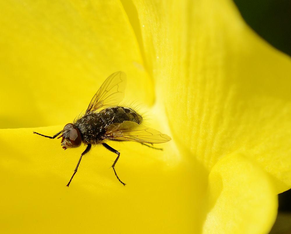 Eine weitere Fliege
