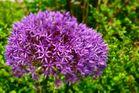 EIne wunderbare Blüte im Kurpark von Oberstaufen