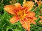 Eine wunderschöne Blume