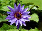 Eine wunderschöne Blume! Ich nenne sie Ingeborg!