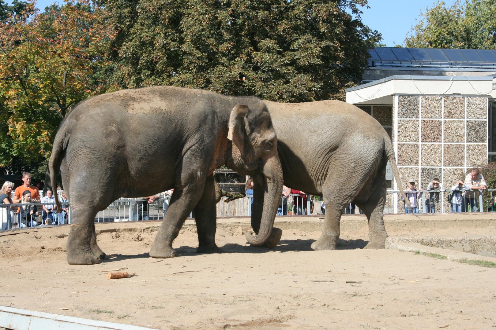 Eineinhalb Elefanten