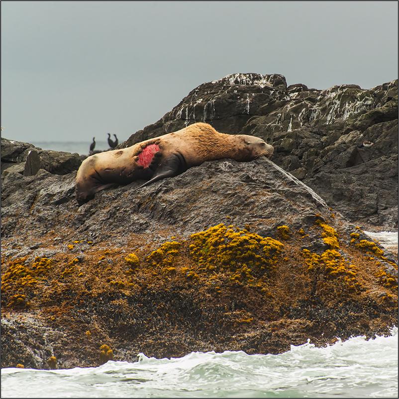 einem orca entkommen