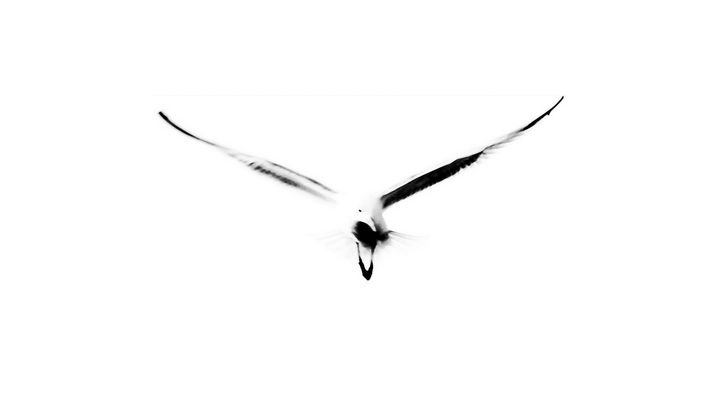 """""""Einem Vogel,...."""