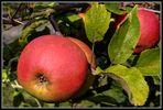 Einen Apfel zu fotografieren ...