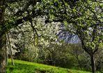 einen Blick in den Frühling