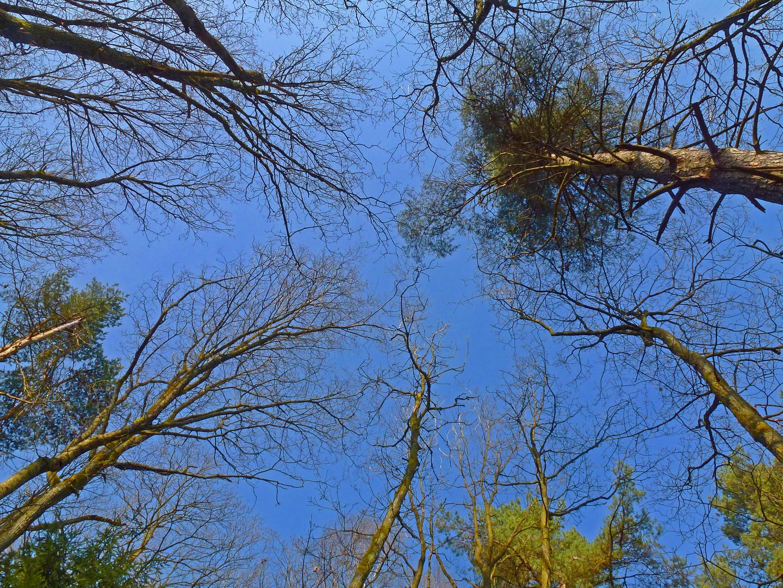 einen Blick in die Baumkronen ...