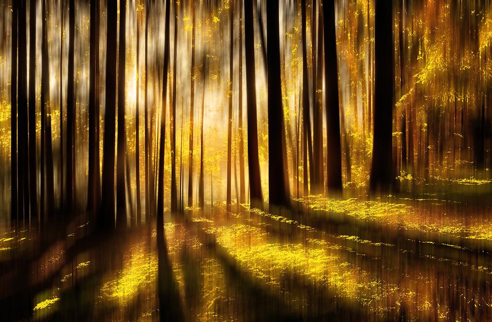Einen goldenen Herbst