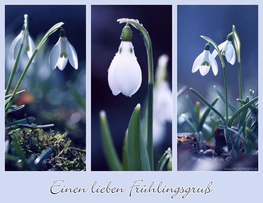 Einen lieben Frühlingsgruß