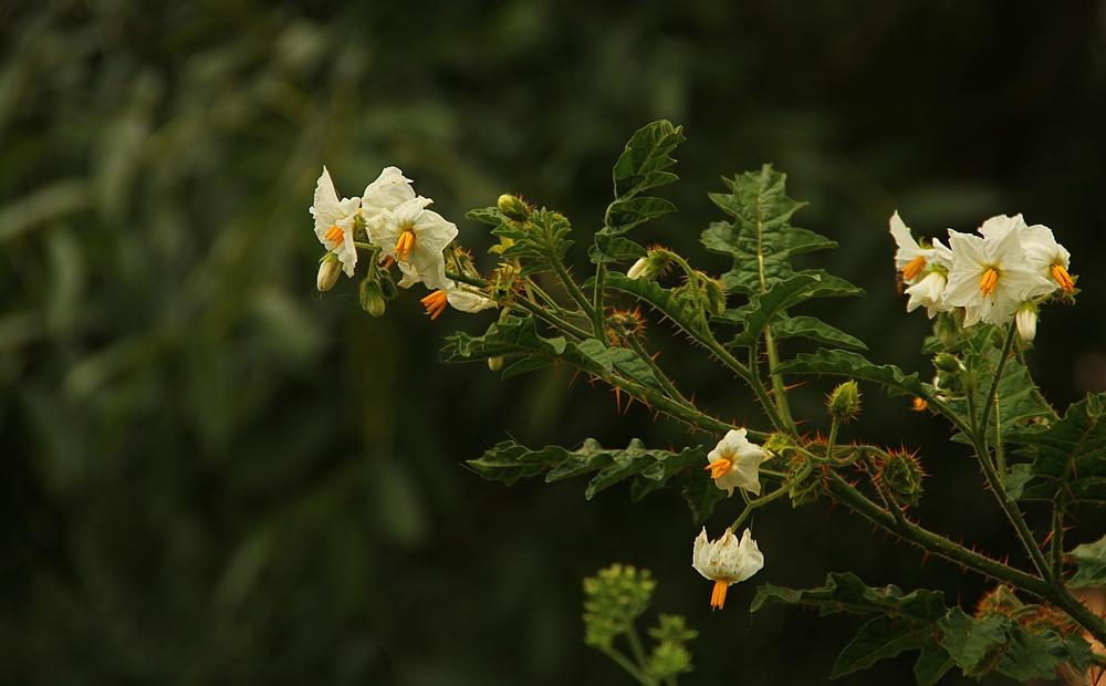 Einen Mittwochsblumengruß ...