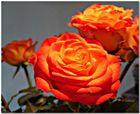 Einen Rosengruß ......
