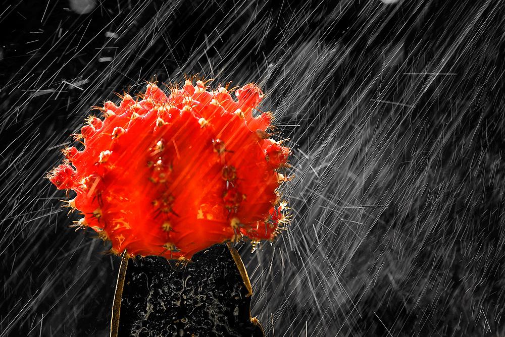 Einen Schirm Bitte!