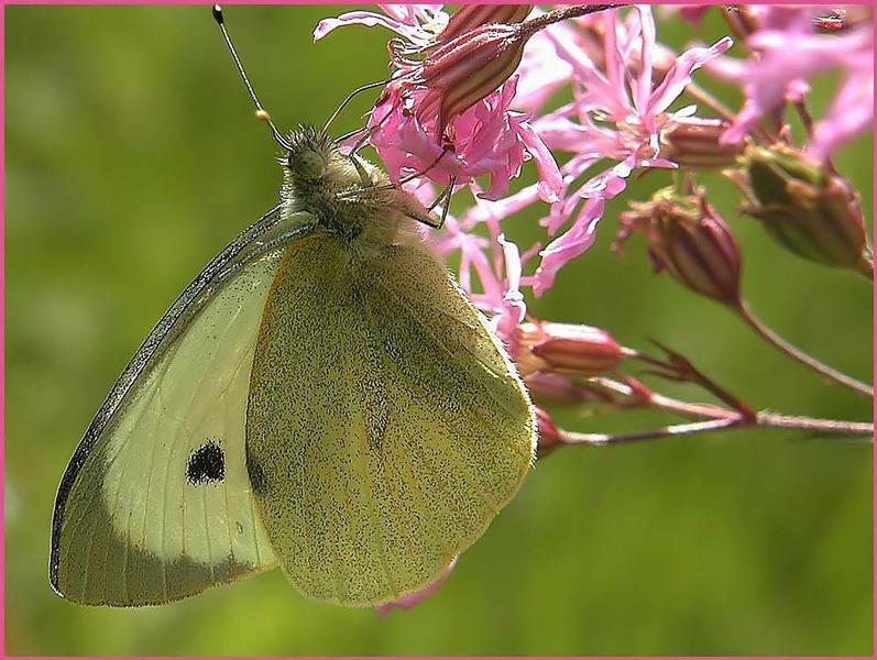 .. einen Schmetterling noch...