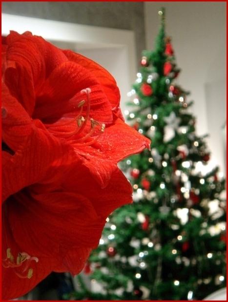 Einen schönen 3. Advent und Frohe Weihnachten.