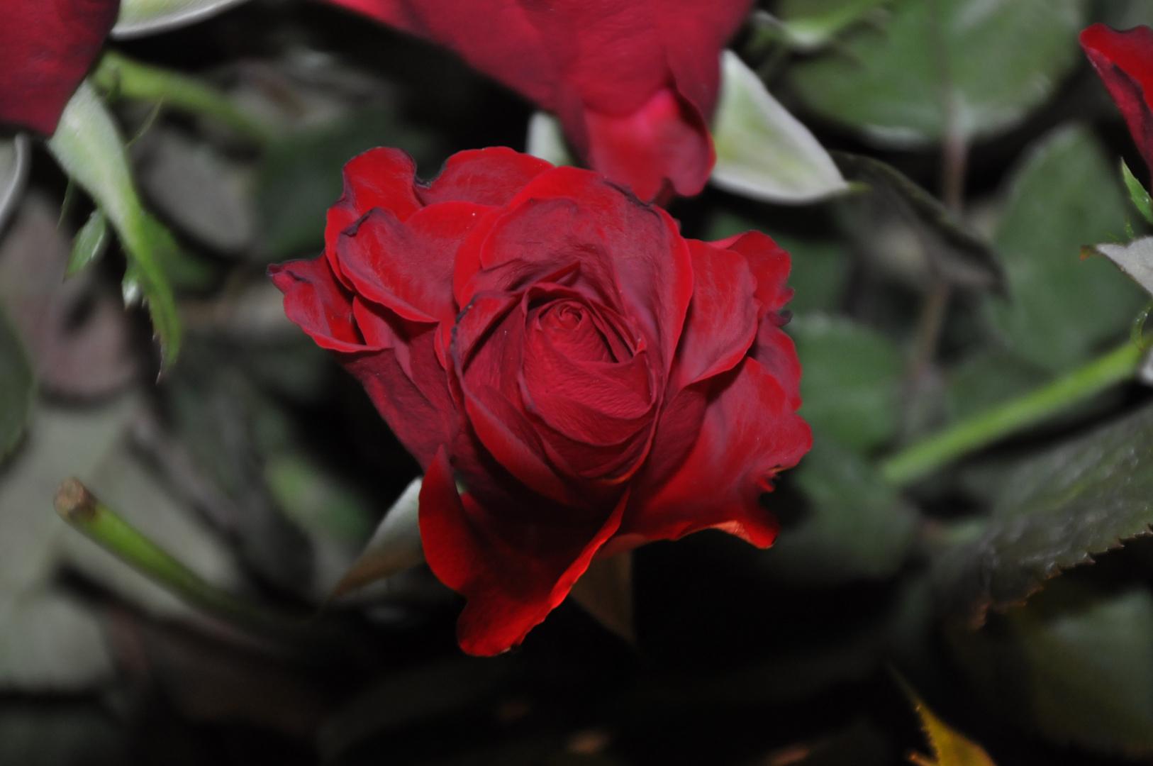 Einen schönen Valentinstag