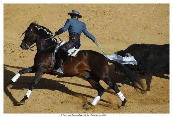 Einer der besten Stierkämpfer Spaniens: Pablo Hermoso de Mendoza