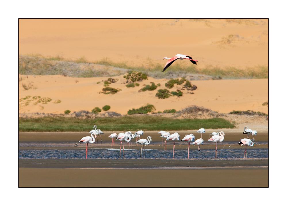 Einer flog übers Flamingo-Nest