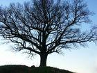 einer meiner Lieblingsbäume :))