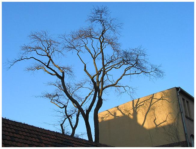 Eines Baumes Bild