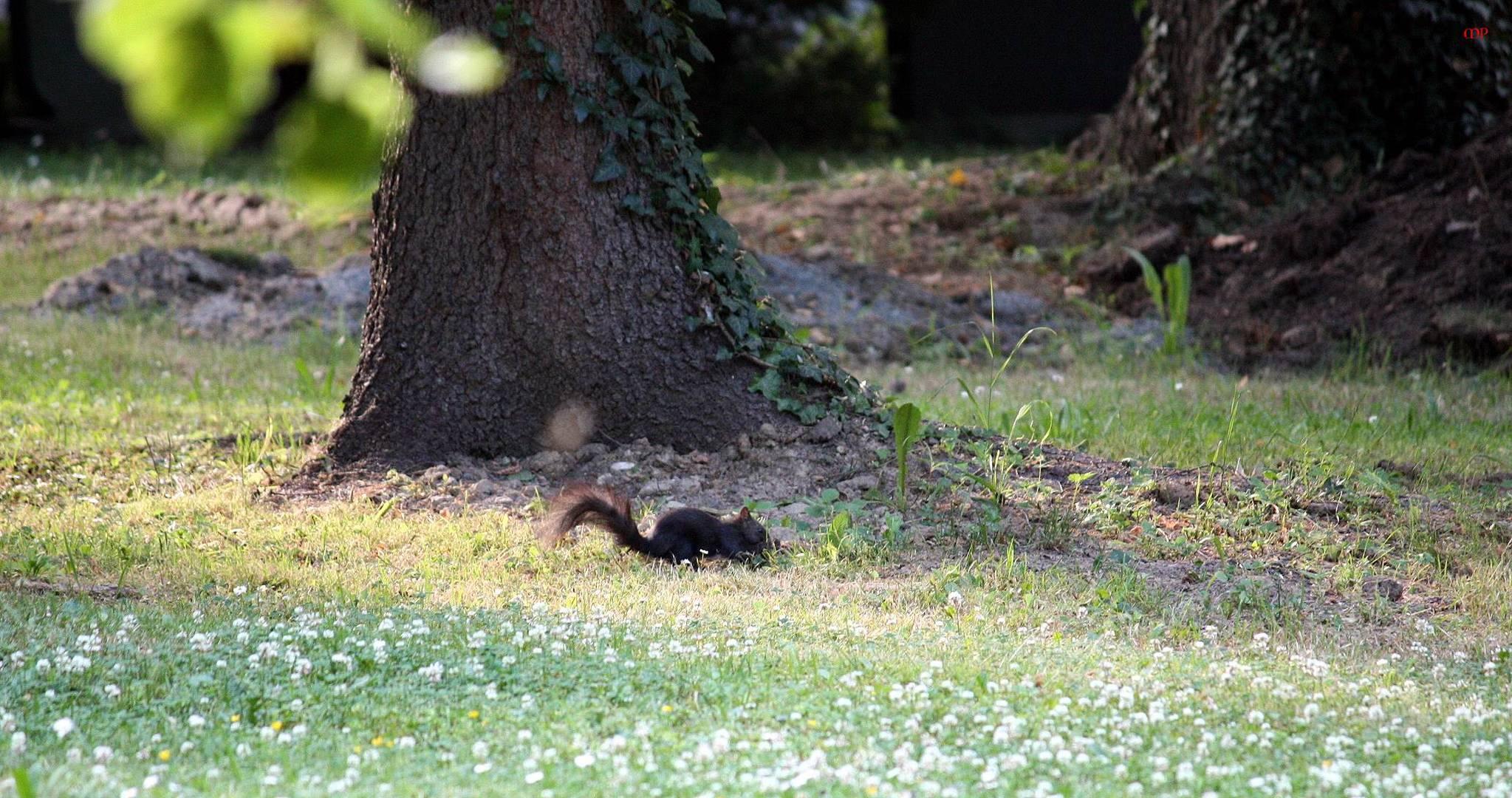 eines der Friedhofs-Hörnchen