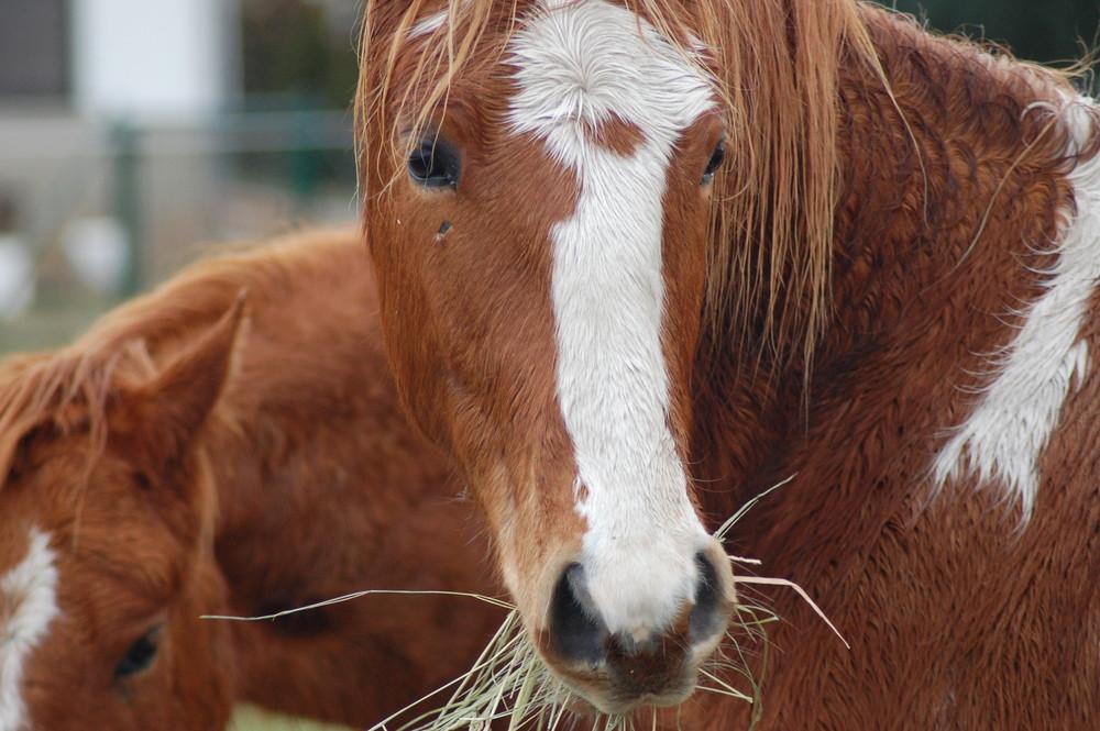 eines der Pferde auf der Weide