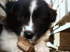 Eines Hundes Treue währt ein ganzes Leben lang