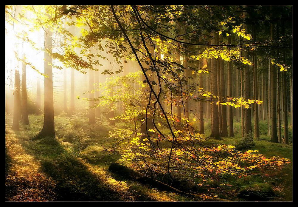 eines Morgens im September