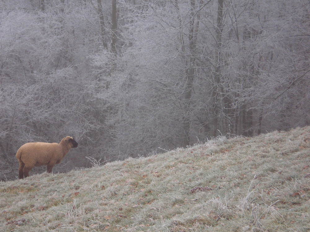 Eines unserer (süßen) Schafe :)
