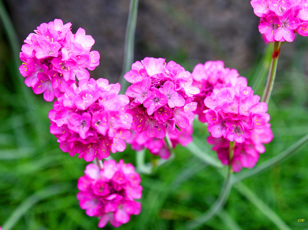 einfach Blüten