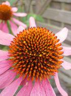 Einfach Blume