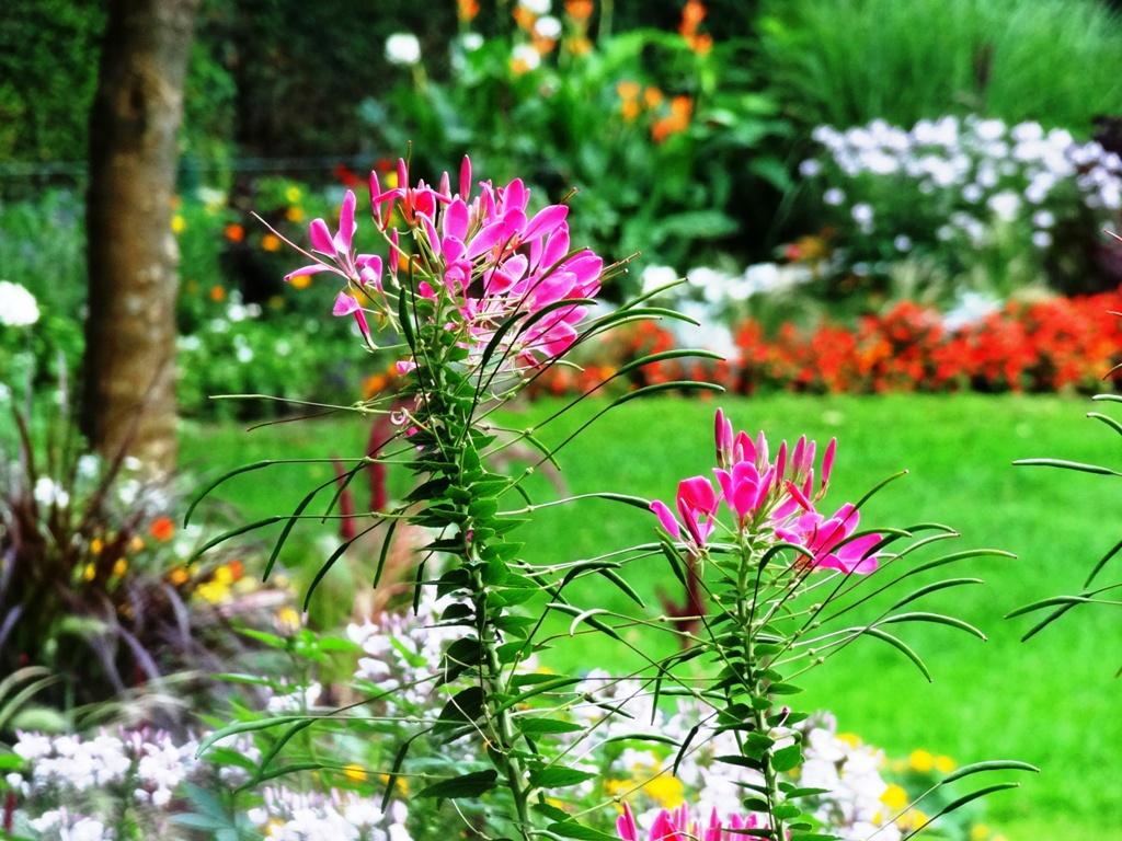 Einfach Blumen