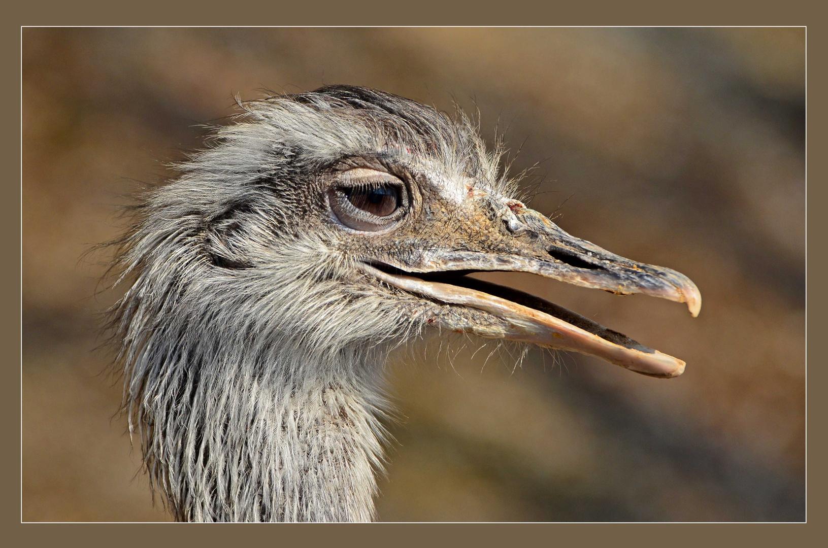 Einfach ein komischer Vogel -