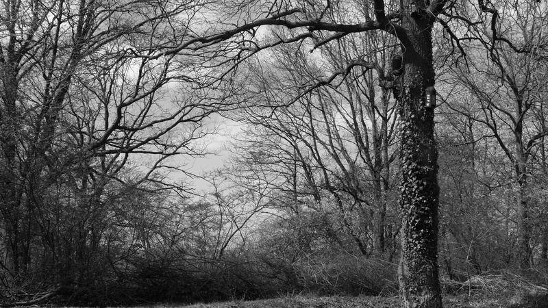 Einfach ein Stück Wald