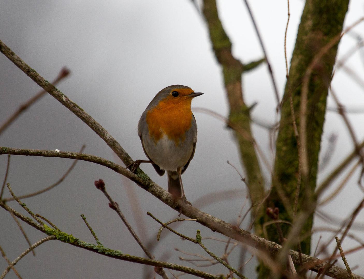einfach ein wunderschöner vogel