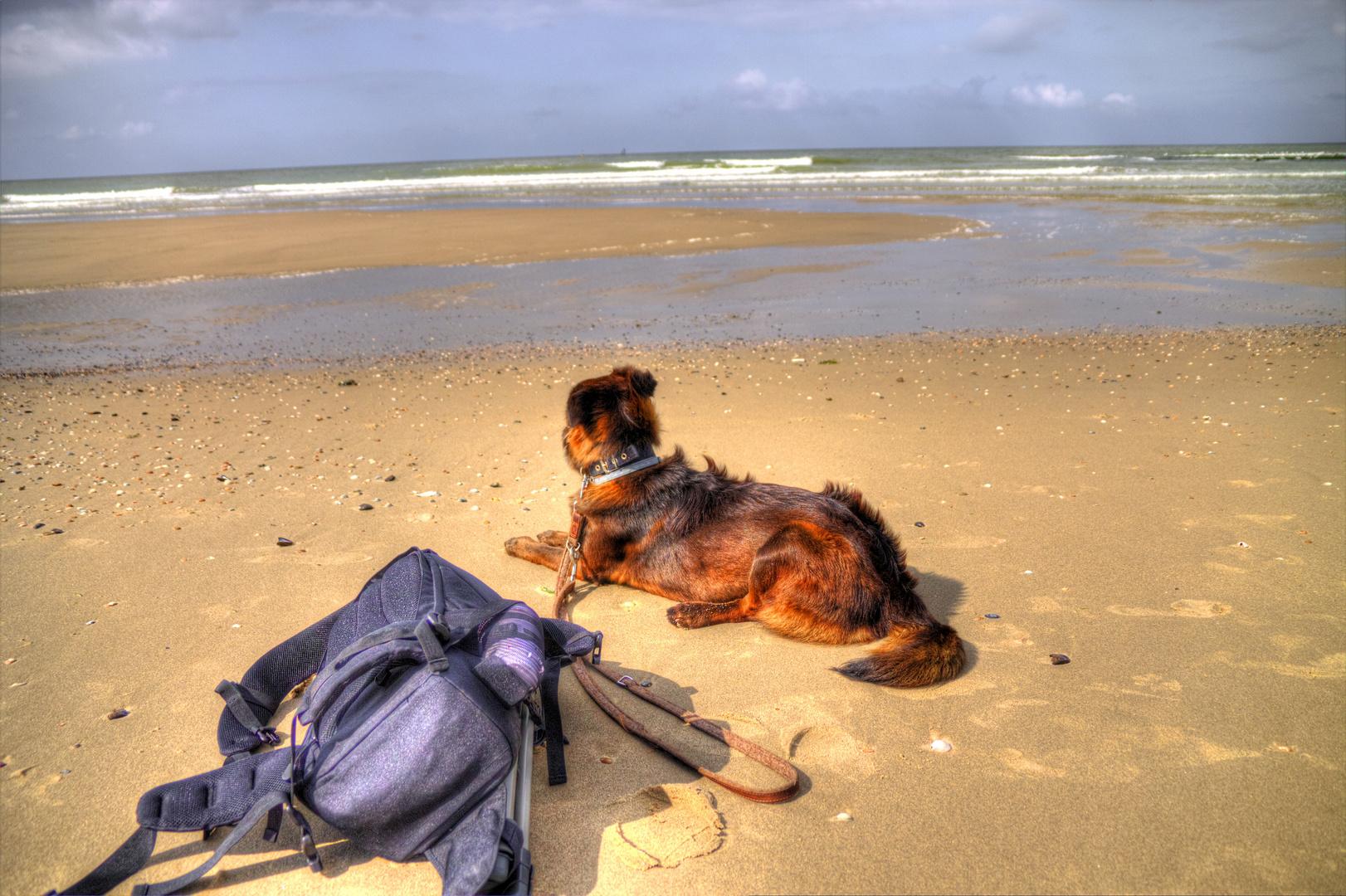 Einfach entspannen und der Nordsee zusehen