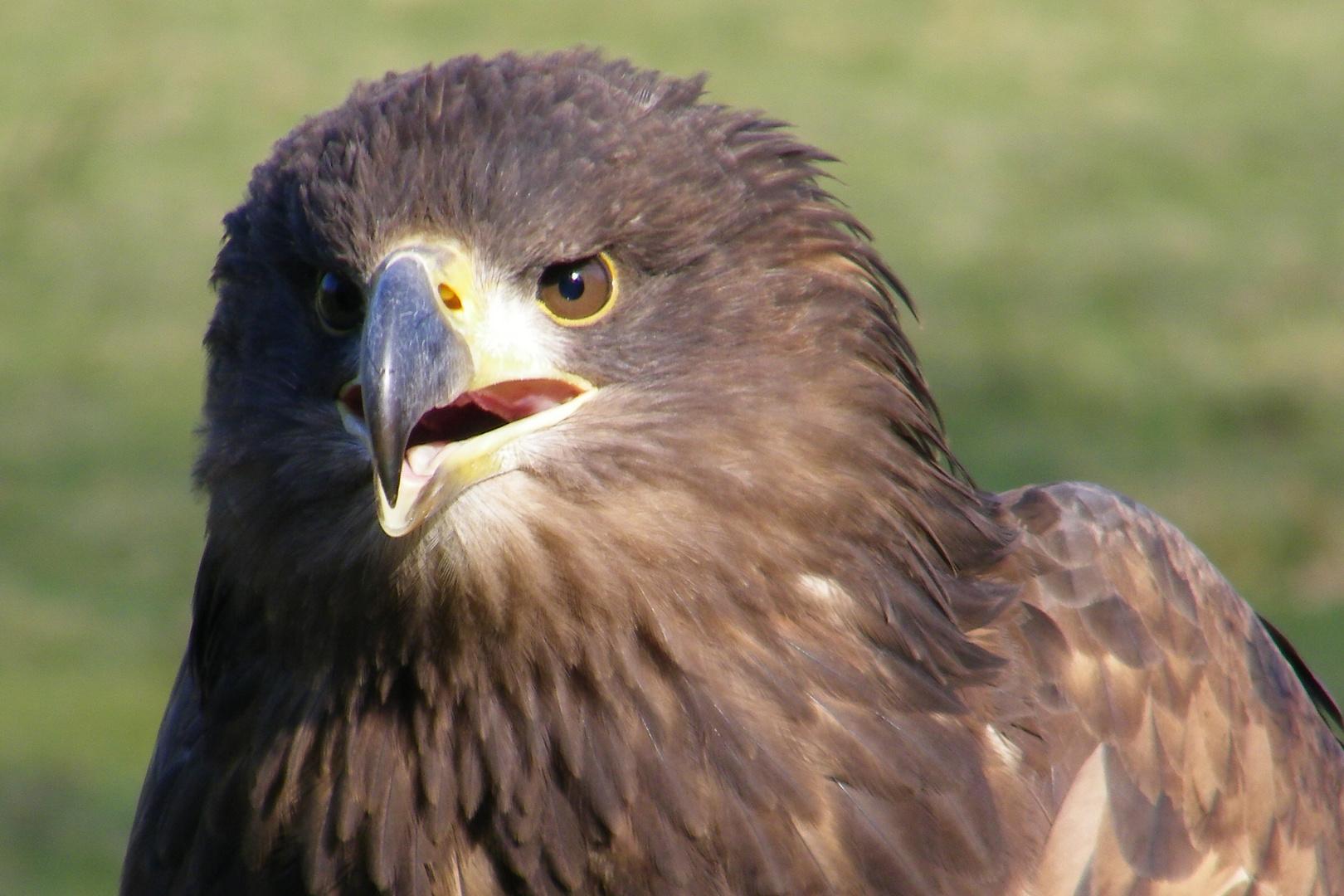 Einfach faszinierend diese Vögel