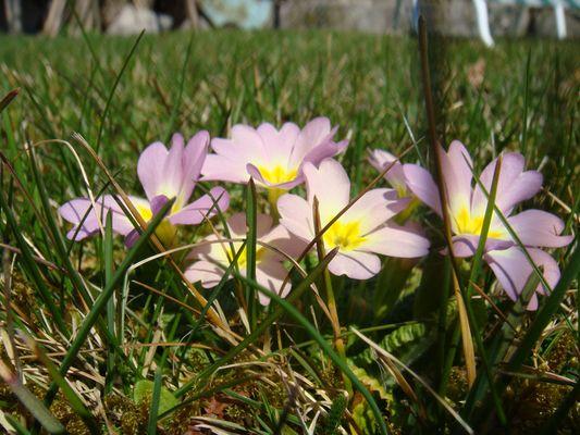 Einfach Frühling