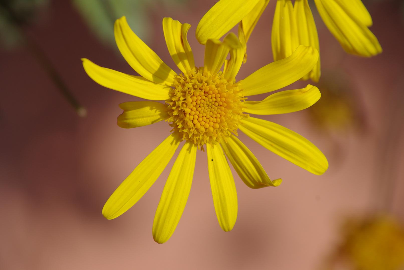 Einfach Gelb