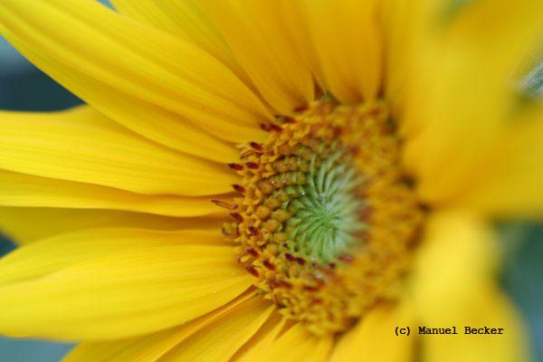 Einfach Gelb...!