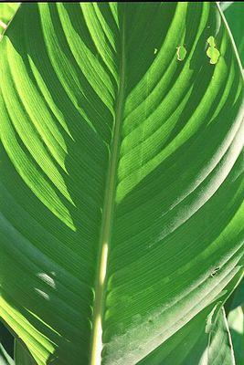 einfach grün :-)