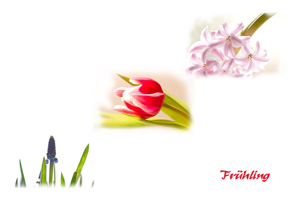 Einfach Lust auf Frühling