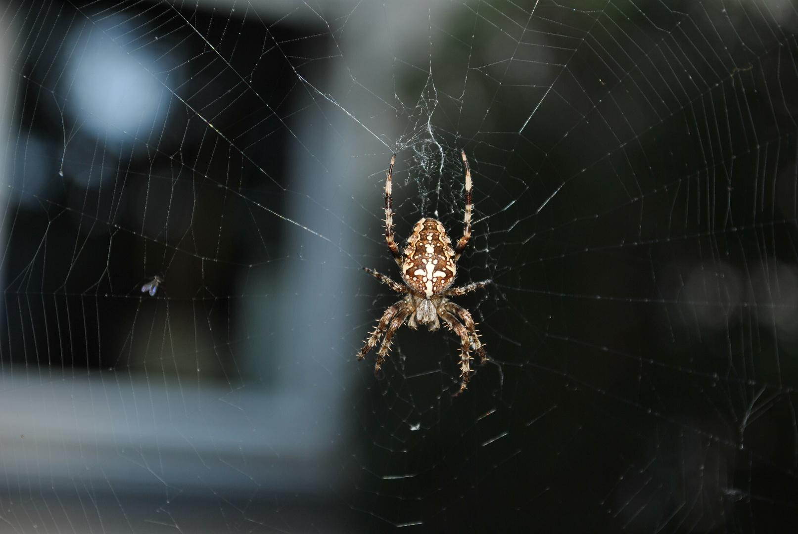 Einfach mal eine Spinne