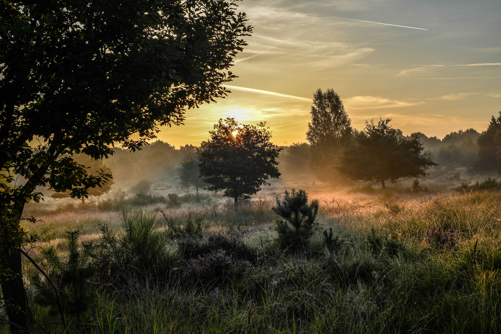 Einfach Morgenlicht