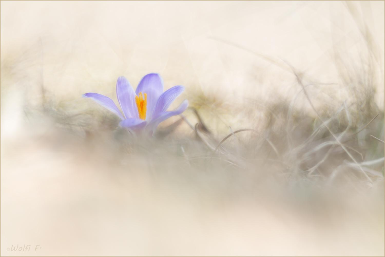 Charmant Frühlingsblumenstrauß Malvorlagen Fotos - Beispiel ...