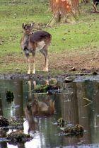 """einfach nur """"Bambi"""""""