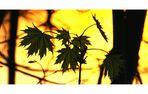 Einfach nur Blätter