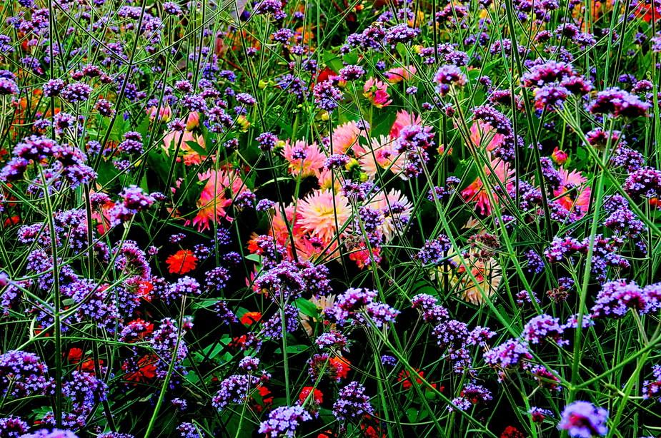Einfach nur Blumen