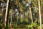 Einfach nur ein mit Licht durchzogener Wald...................