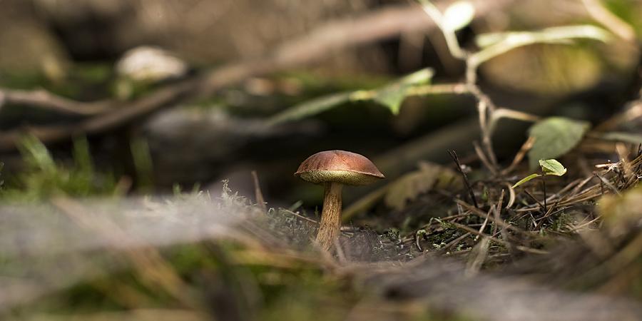 Einfach nur ein Pilz