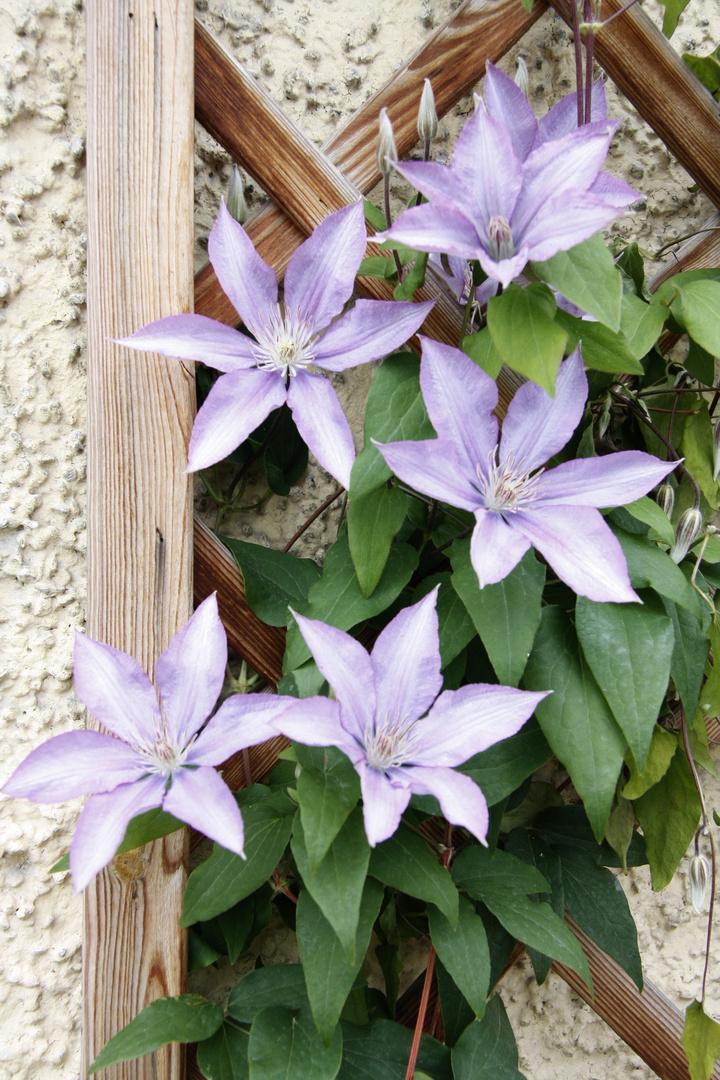 Einfach nur ein Vorgeschmack auf den Frühling - Blumen am Haus
