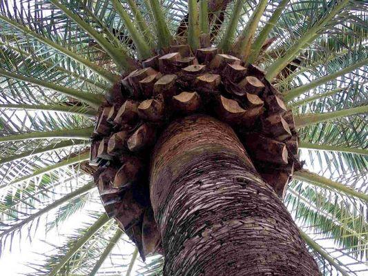 einfach nur eine Palme